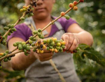 Ο αντίκτυπος της κλιματικής αλλαγής στη βιομηχανία καφέ